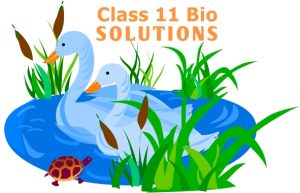 NCERT Solutions For Class 11 Biology English and Hindi Medium